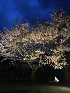 夜桜を見ながら会議